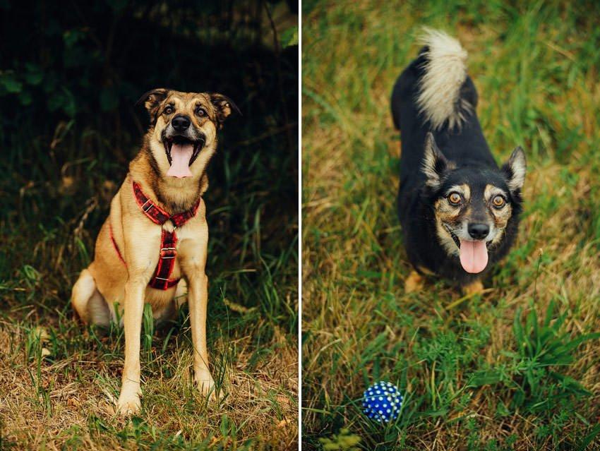 sesja narzeczenska z psami 002 - Sesja narzeczeńska