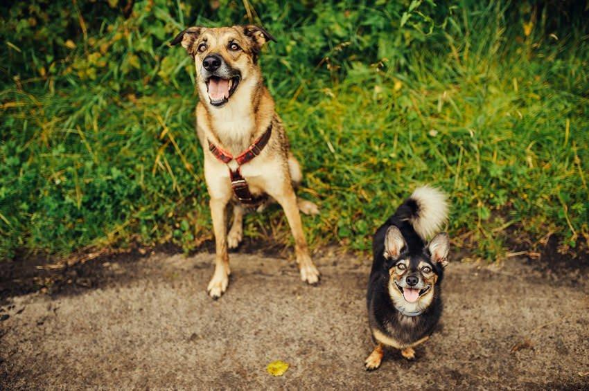 sesja narzeczenska z psami 016 - Sesja narzeczeńska