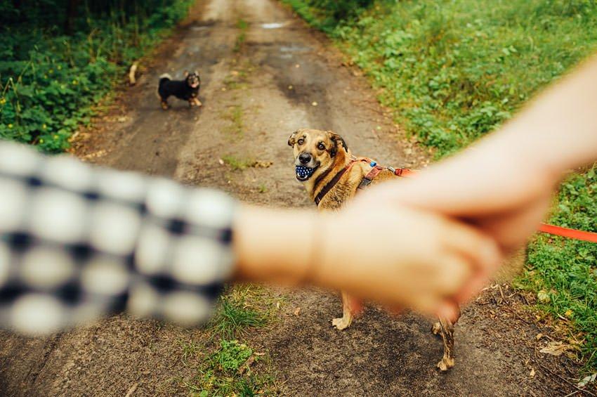 sesja narzeczenska z psami 018 - Sesja narzeczeńska